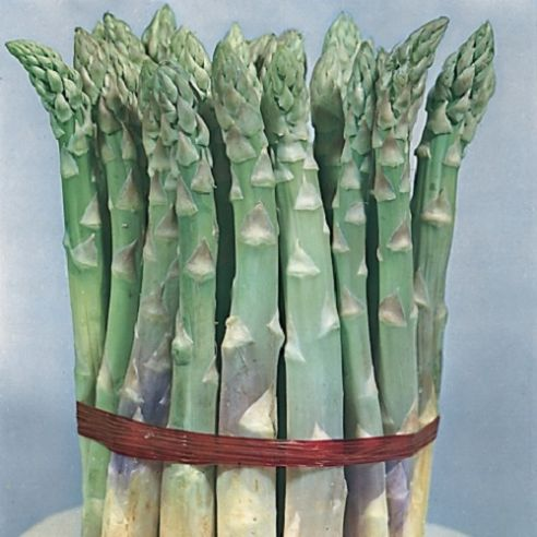 Asparagus Mary Washington - Appx 250 seeds